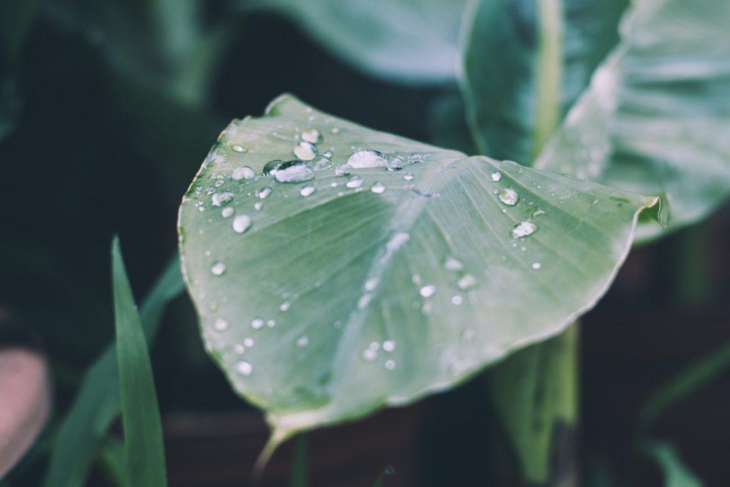 rain-2573488_1920